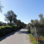 As oliveiras....