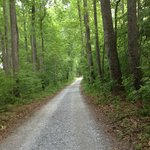 The drive way to Poplar Forest