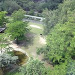 Blick in den Tiergarten