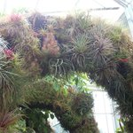 In the Greenhouse - Daniel Stowe Botanical Garden, Charlotte, NC