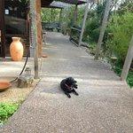 Sascha waiting greet visitors