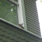 Robin enjoyed her nest at Sinclair Inn.