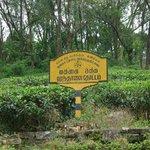 Hantane Tea Estate