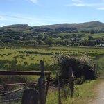 fields of sheep