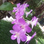 Fresh Blooms of Orchid