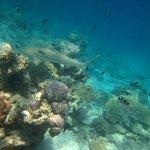 Traumhafte Unterwasserwelt - Schwarzspitzenriffhai