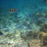 Traumhafte Unterwasserwelt - Blauer Fischschwarm