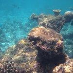 Traumhafte Unterwasserwelt