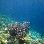 Traumhafte Unterwasserwelt - Fischschwarm