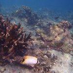 Traumhafte Unterwasserwelt - schöne Korallen