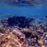 Traumhafte Unterwasserwelt - noch ein anderer Schwarm
