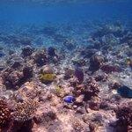 Traumhafte Unterwasserwelt - so viele verschiedene Fische