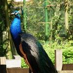 Zoo Schwerin