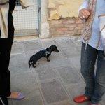 Venecianos paseando sus mascotas.