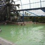 Indian Hot Springs Pool