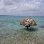 Photo of Agave Blue Bacalar