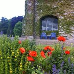 Flowers Around Adare Manor