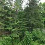 Woods around the cabin