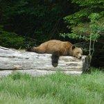 Sleeping Bear on Quadra