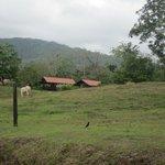 Trueno's pasture
