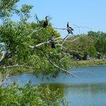 Hundreds of birds nest on the island