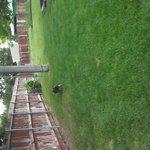 Private dog park.