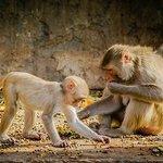 Well fed monkey