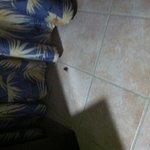 Roach!!!!