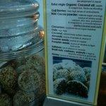 organic superfood truffles