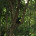 de Colobus apen vlakbij je in je eigen tuin.