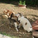 le paradis des chatons