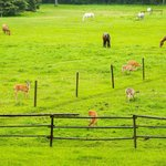 Horses and deer in the pasture just outside the windows
