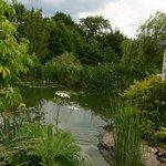 Le jardin et son étang aux canards.