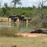 possible day trip from bombasos - hlane game reserve
