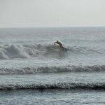 South beach surfing