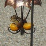 Chipmunk on bird feeder