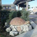 Hollywood Beach is Sea Turtle Friendly!  ;o)