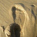 colore sabbia