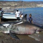 19 foot Sharky !!!