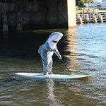 Even sharks like to SUP