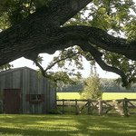 Garden Shed amidst old walnut trees