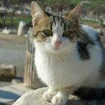 Lovely kitten @ Ephesus