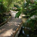 Walkway above creek to rooms