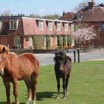 Local Ponies