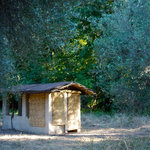 olive grove shower