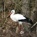Vogelpark Herborn