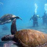 Con 2 tortugas!!!
