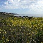 Walking along the boardwalk of Moonstone Beach
