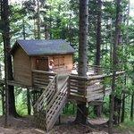cabane épicéa