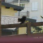 écureuil mangeant les noisettes